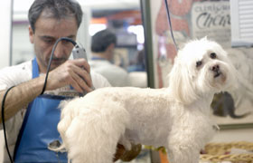 Riley gets groomed at Famous Fido's
