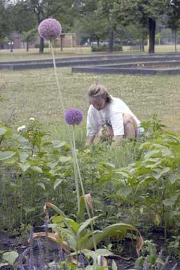 Working in Skinner Park community garden